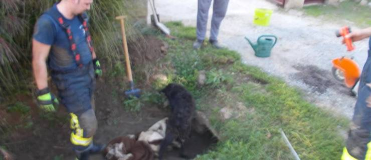 Đurđevački vatrogasci spasili psa i smjestili se na 3. mjesto top 10 liste pozitivaca